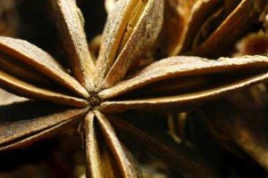 Vibrations Coaching - anise seed pod of Inner Wisdom