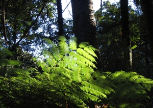 Vibrations Coaching: fern leaves
