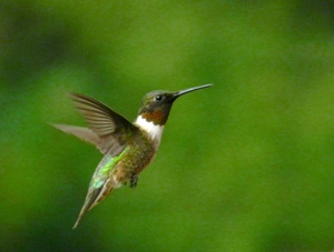 Vibrations Coaching: Humming bird
