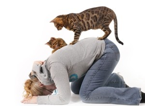Vibrations Coaching: Woman and cats playing