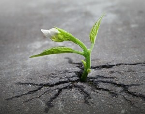 VibrationsCoaching: Sprout of determination and will