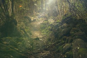 VibrationsCoaching:Forest View