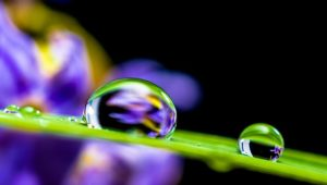 Vibrations Coaching: a drop of water on a leaf magnifies the flower behind it