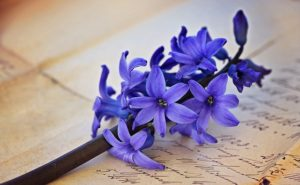 Vibrations Coaching Hyacinth on a letter from Wisdom