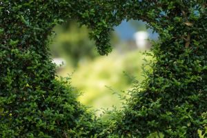 VibrationsCoaching:A Focus on Love, a heart in a hedge
