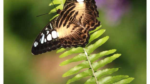 Vibrations Coaching: butterfly by don sharp