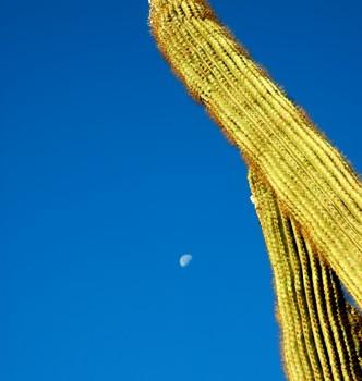 Vibrations Coaching: Saguaro by David Dyet