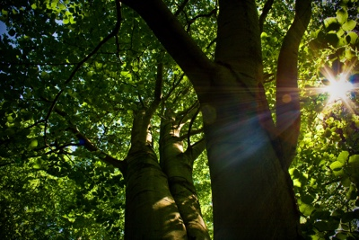 Vibrations Coaching: Sun shining through trees in a forest