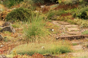 Vibrations Coaching: Search for Meaning, Stone Path by Colin Brough