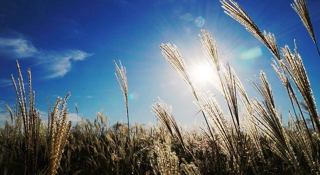 VibrationsCoaching:Grass Reeds in Sunlight, aligned agreements